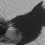 bunny's shadow